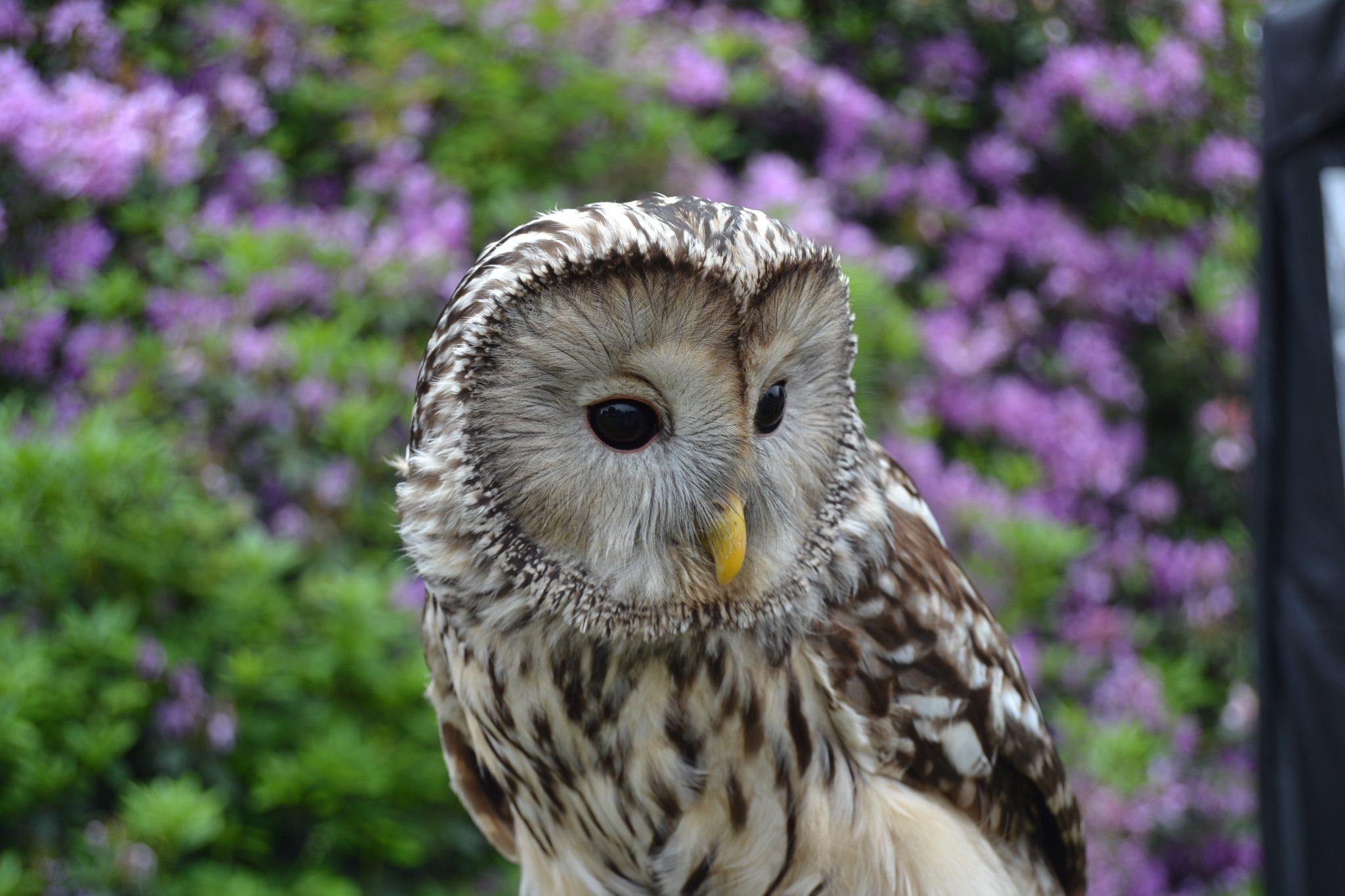 customers original owl photo