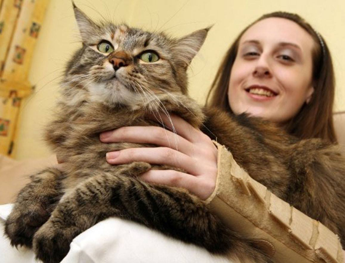 girl with her cat lovely photo