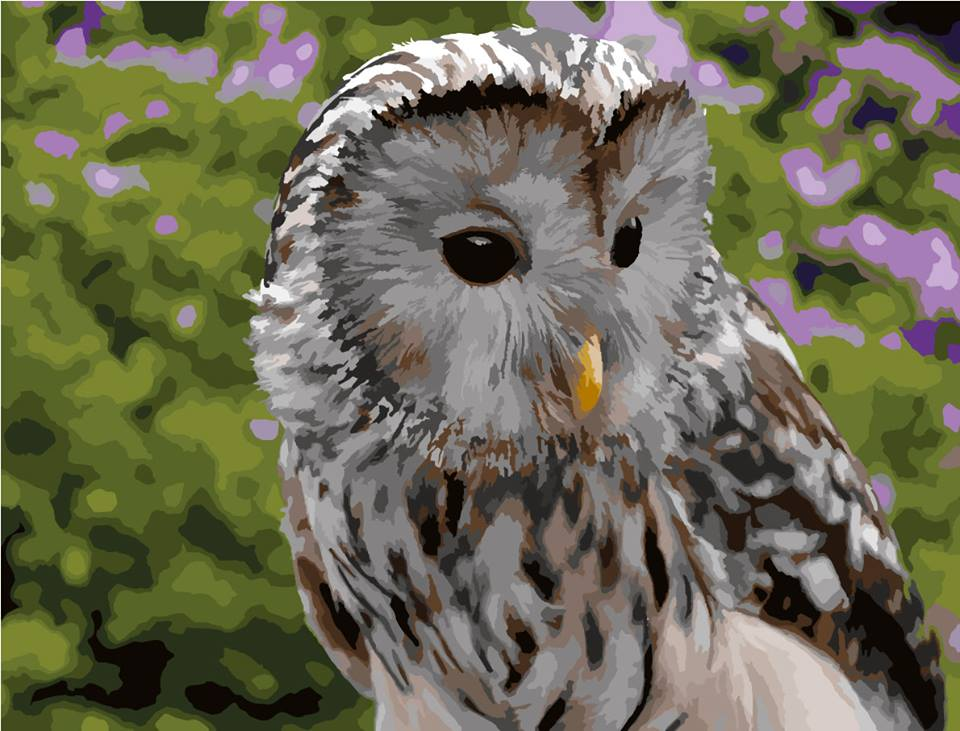 art work of paint by numbers owl