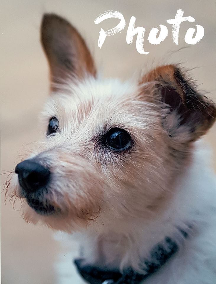 terrier photo for paint by numbers