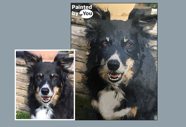collie paint by numbers
