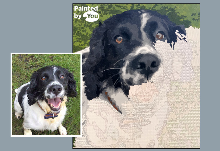 spaniel paint by numbers