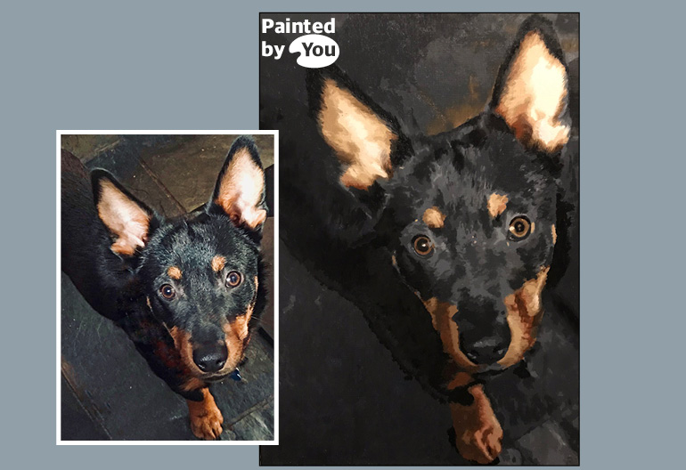 yorkshire heeler paint by numbers